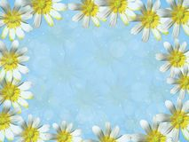 Blue background with white flowers Stock Images