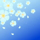 White flowers and flying petals Royalty Free Stock Image