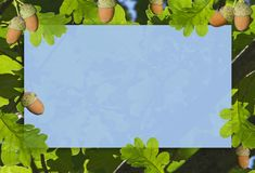 Frame of acorns with green leaves. royalty free stock images