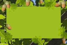 Frame of acorns with green leaves. royalty free stock photos