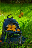 Blue backpack with orange fruit on outdoor Royalty Free Stock Photography