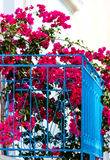 Blue balcony with potted bougainvillea Royalty Free Stock Photography