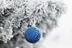 Blue ball on branch of a Christmas tree in frost and snow Royalty Free Stock Photography