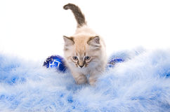 Blue Ball, Decoration Of The New Year Royalty Free Stock Photos