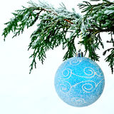 Blue ball on fir branch Stock Photo