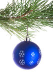 Blue ball on pine tree branch Royalty Free Stock Photo