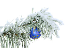 Blue ball on snowy pine branch. Isolated Royalty Free Stock Photos