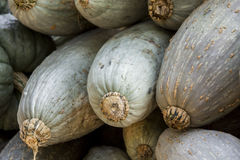 Blue banana grey banana cucurbita pumpkin pumpkins from autumn  Royalty Free Stock Image