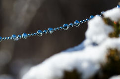 Blue Beads Strung on the Outdoor Christmas Tree Royalty Free Stock Photo