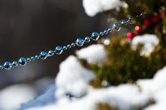 Blue Beads Strung on the Outdoor Christmas Tree Royalty Free Stock Photography