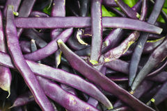 Blue beans Royalty Free Stock Images