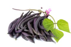 Blue beans. With blossom and leaves before a white background royalty free stock photos