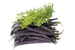 Blue beans. With winter savory before white background Stock Photo