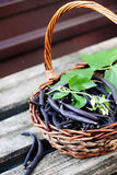Blue beans in a basket Stock Photos