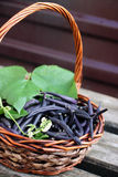Blue beans in a large basket Stock Images