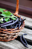 Blue beans in a large basket Royalty Free Stock Photos