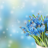 Blue beautiful background  with flowers Royalty Free Stock Images