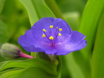 Blue beautiful flower stock images