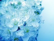 Blue beauty Stock Images
