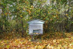 Blue beehive in autumn forest stock photo