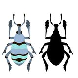 Blue beetle bug vector illustration stock illustration