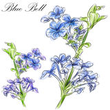 Blue Bell Flower. An image of a watercolor blue bell flower stem Stock Image