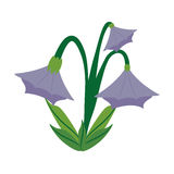 Blue bell flower image. Illustration eps 10 Royalty Free Stock Photography