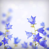 Blue bell flowers background Stock Photography