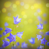Blue bell flowers background Stock Photo