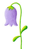 Blue bellflower Stock Images