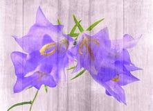 Blue bellflower Stock Photography