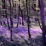 Purple haze on the woods stock photography