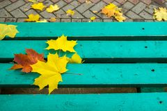 Yellow and red maple leaves on turquoise painted old wooden bench in public park. Blue bench in a public park with maple leaves on it. Autumn mood Royalty Free Stock Photography