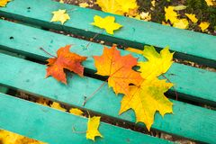 Yellow and red maple leaves on turquoise painted old wooden bench in public park. Blue bench in a public park with maple leaves on it. Autumn mood Stock Photography