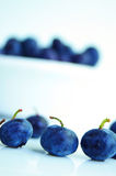 Blue berries Royalty Free Stock Photos