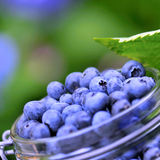 Blue berries Stock Photo