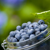Blue berries royalty free stock images