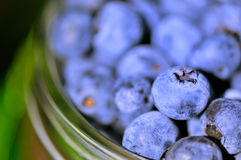 Blue-berries in glass Stock Photography