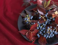 Blue berries grapes red leaves bokeh background macro texture. Blue berries grapes red leaves bokeh background still life royalty free stock photo