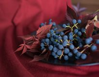Blue berries grapes red leaves close-up macro texture. Blue berries grapes red leaves still life autumn macro bokeh background stock images