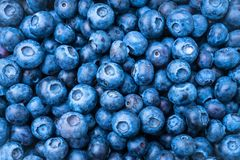 Blue berries. Many fresh blue berries as background stock image