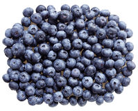 Blue Berry Royalty Free Stock Photos