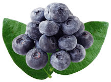 Blue Berry and Leaves Stock Photography