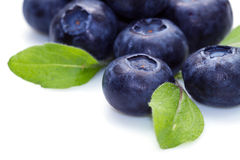 Blue berry Stock Photography