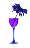 Blue-berry party drink Stock Photos