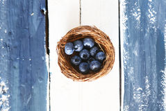 Blue berry photo Stock Photography