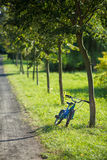 Blue bicycle leaned against a tree Royalty Free Stock Image