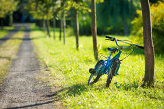 Blue bicycle leaned against a tree Stock Image