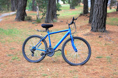 Blue bicycle. Mens blue bicycle parked in country bush land setting stock images