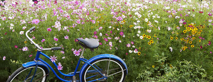Blue Bicycle Pink Field Flowers. An old blue bicycle parked next to field of pink and yellow flowers Stock Photography